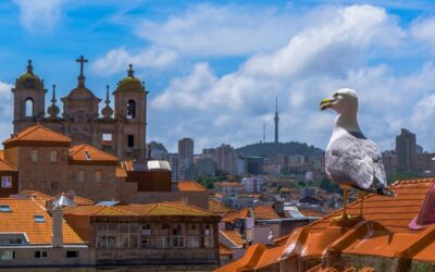 Seagull on the red roofs of Porto