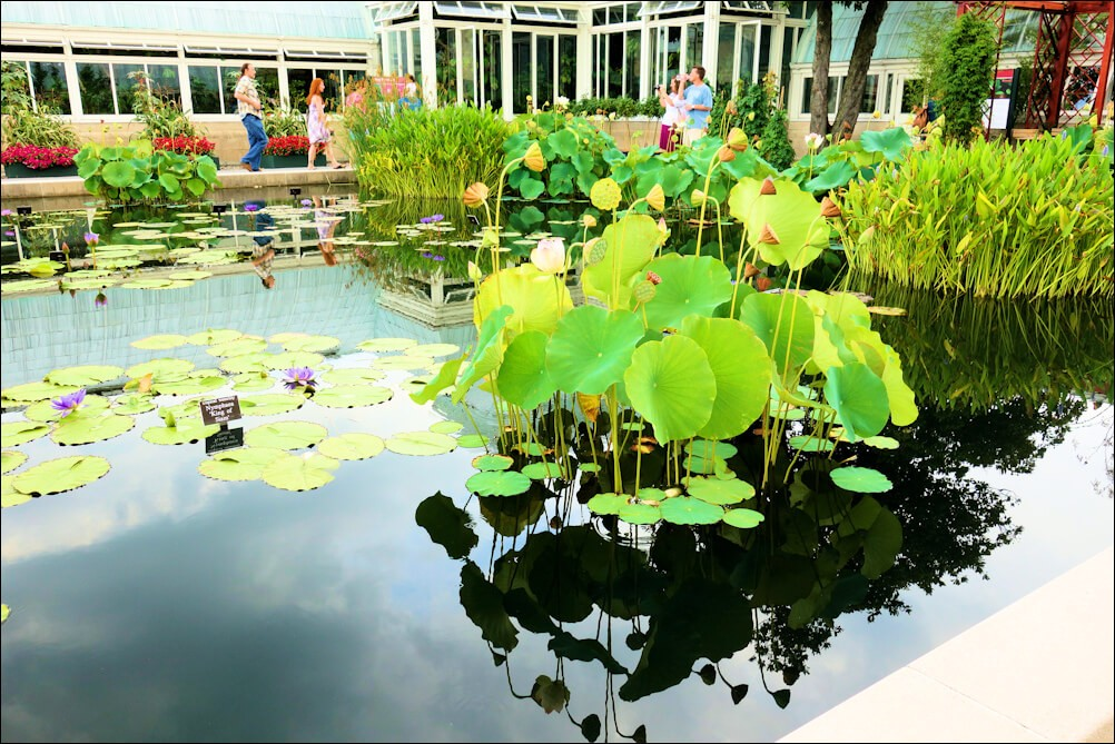 Lotus Garden in NYC places to visit in 2 days