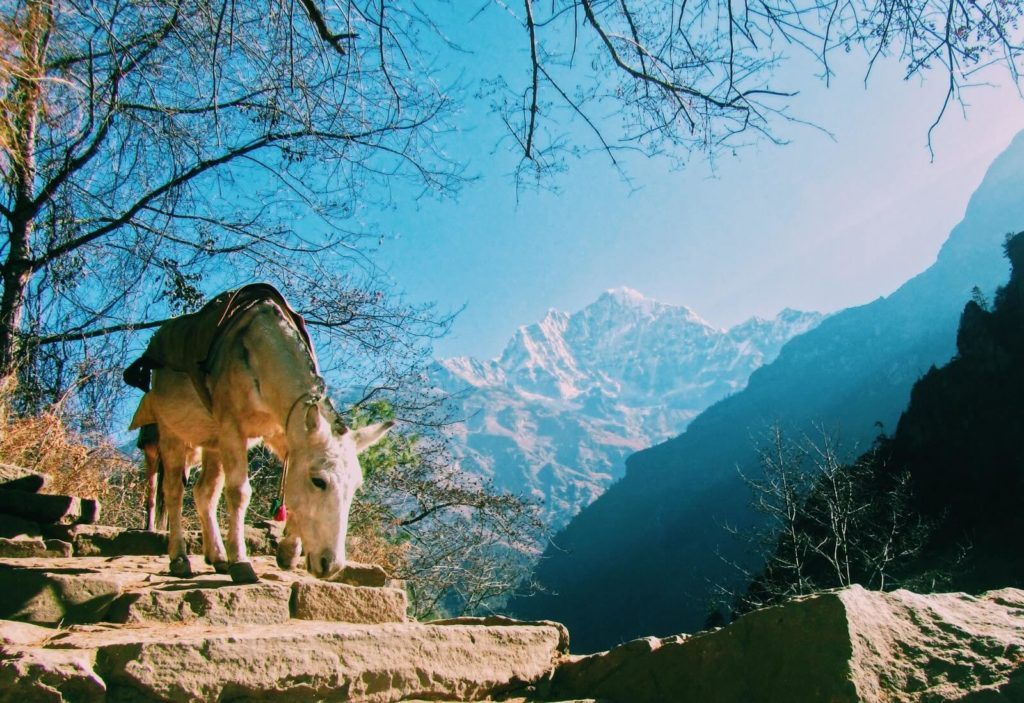 World heritage sites in Nepal, panorama