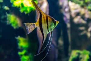 Fish in the aquarium, best fishing spots