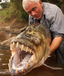 Goliath tiger fish with a fisherman