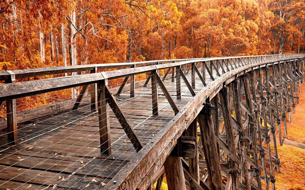 Noojee Trestle bridge not far from Melbourne, one day trips