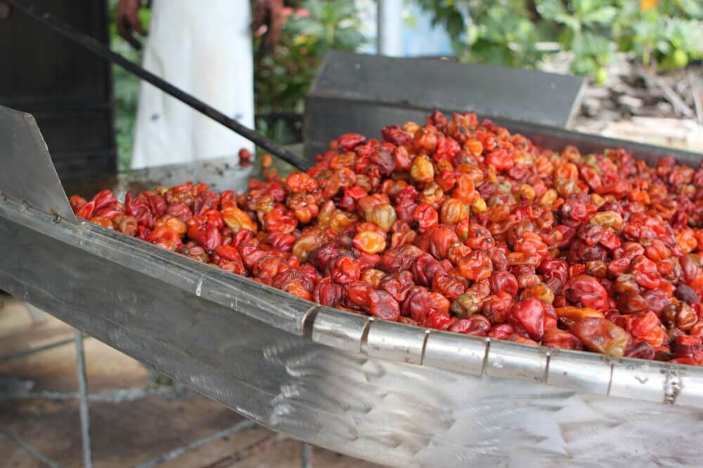 Red pepper, cheap street food in Belize