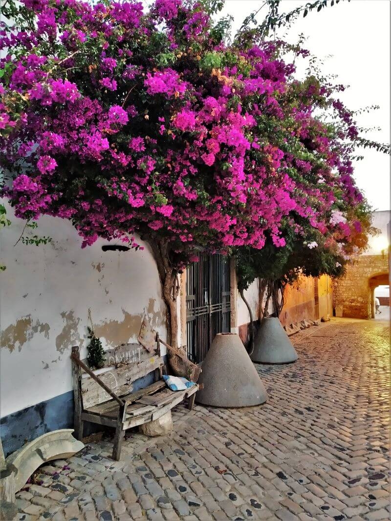 Faro old town flowers, things to do in a weekend