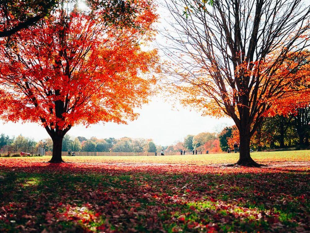 Prospect park in Brooklyn, NYC in autumn with colorful leaves