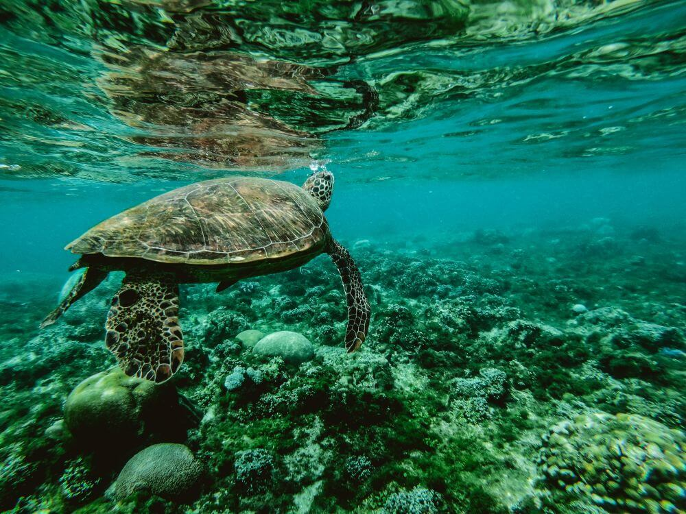 Fitzroy Island experience water turtle swimming