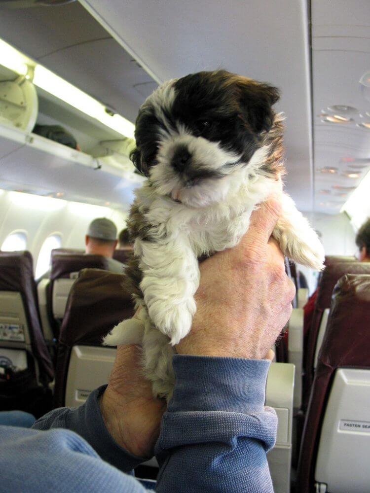 Support dog in a plane supporting people in medical need