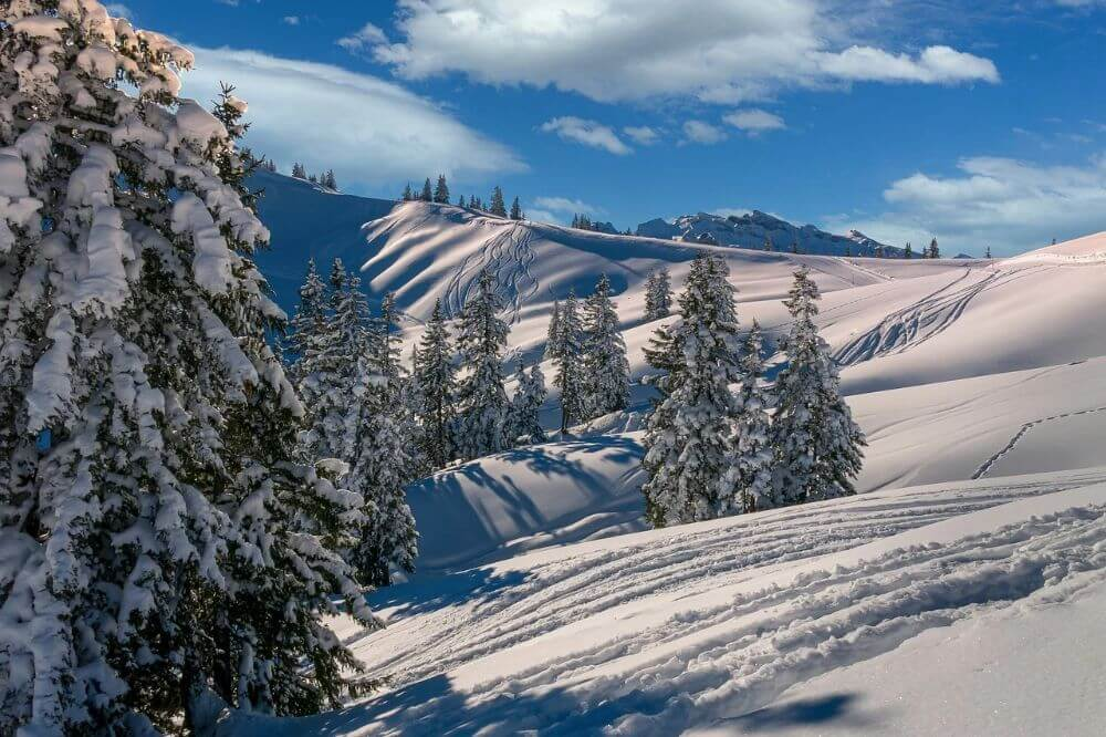 Winter trees under snow in the mountains ski resort