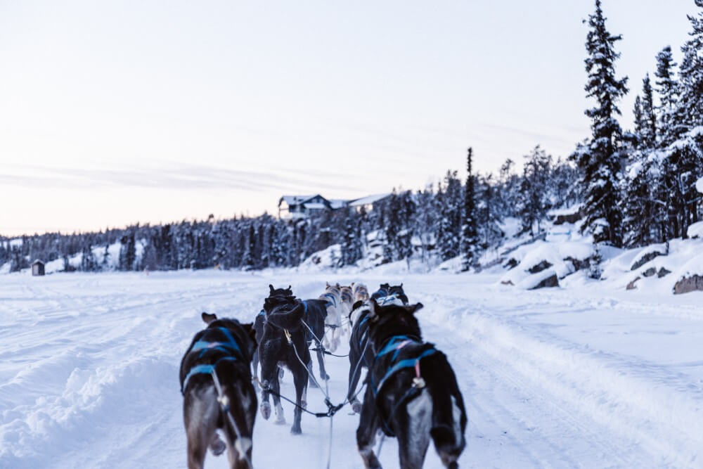 Dog sledding in Norway, things to do in winter